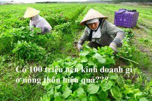 Có 100 triệu nên kinh gianh gì ở nông thôn